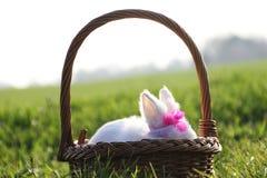 Weinig wit konijn in een mand Stock Afbeelding