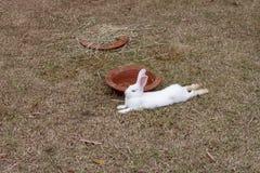 Weinig wit konijn neemt genoegen in het gras stock afbeeldingen