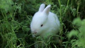 Weinig wit konijntje stock footage