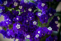 Weinig witte bloem in purple royalty-vrije stock foto's