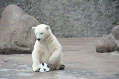 Weinig witte ijsbeer met bal Stock Afbeelding