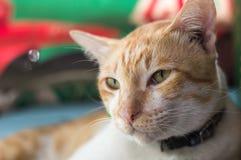 Weinig witte kat Stock Foto