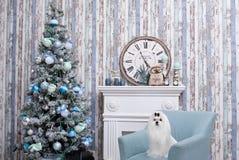 Weinig witte mooie hond Maltees royalty-vrije stock afbeelding