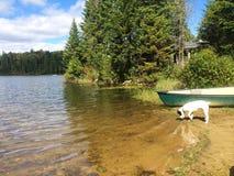 Weinig witte puppyhond in het land op het water met boot royalty-vrije stock afbeeldingen