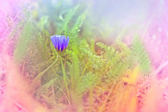 Weinig zachte bloem in weide Royalty-vrije Stock Foto's