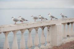 Weinig zeemeeuwen die op balustrade tegen het overzees zitten royalty-vrije stock fotografie