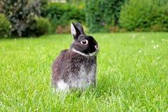 Weinig zwart konijn op groene grasachtergrond Stock Afbeelding