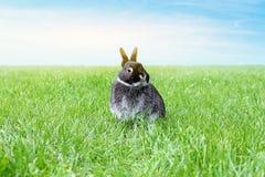 Weinig zwart konijn op het de lentegebied De achtergrond van de lente Stock Fotografie