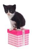 Weinig zwarte die katje en giftdoos op wit wordt geïsoleerd Royalty-vrije Stock Fotografie