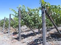 Weinindustrie in Maipo-Tal, Chile Lizenzfreies Stockfoto