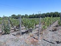 Weinindustrie in Maipo-Tal, Chile Stockfoto