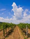 Weinkellerei Lizenzfreies Stockbild