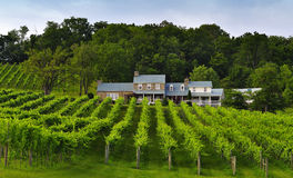 Weinkellerei Stockbilder