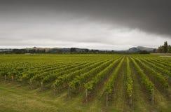 Weinkellerei Stockfoto