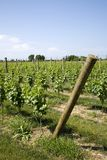 Weinkellerei auf Long Island Lizenzfreies Stockbild