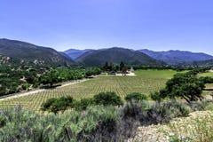Weinkellerei entlang Monterey County Straßenlandstraße G16 Stockfotografie
