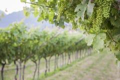 Weinkellerei in Italien Lizenzfreies Stockfoto