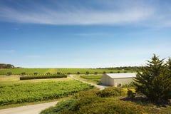 Weinkellerei-Landschaft Stockfoto