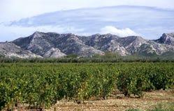 Weinkellerei in Südfrankreich Lizenzfreie Stockfotos