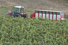 Weinkellerei-Traktor-Zufuhrbehälter-Weinberg Lizenzfreies Stockbild