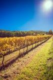 Weinkellerei während der Herbstsaison Lizenzfreie Stockbilder