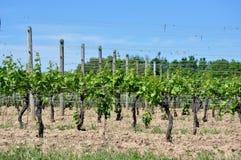 Weinkellerei-Weinberg Lizenzfreie Stockfotos