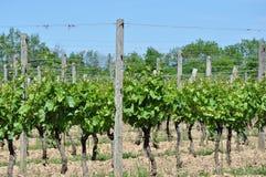 Weinkellerei-Weinberg Stockfoto