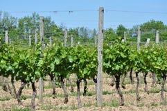 Weinkellerei-Weinberg Stockbild