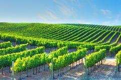 Weinkellereien Stockbilder
