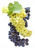 Weinkonzept über weißem Hintergrund Lizenzfreie Stockfotografie