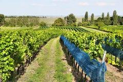 Weinland in Österreich Lizenzfreies Stockfoto