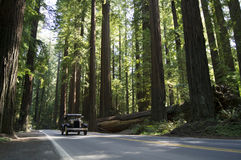 Weinlese-Auto in den Kalifornien-Rothölzern Lizenzfreie Stockbilder