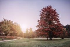 Weinlese Autumn Park auf Sonnenaufgang lizenzfreie stockfotografie