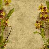 Weinlese-Blumen-Einklebebuch-Hintergrund Lizenzfreie Stockbilder