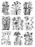 Weinlese-botanische Blumen-mit Blumenzeichnungen Stockfotos