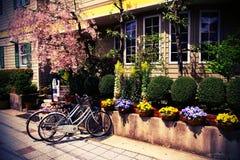 Weinlese-Fahrräder und Kirschblüte Stockfotos