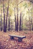 Weinlese filterte Bild der Bank in einem Wald Lizenzfreie Stockfotos