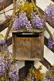 Weinlese-französischer Briefkasten mit Spam-Filter und Glyzinie Lizenzfreies Stockbild