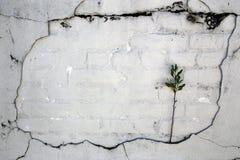 Weinlese-gebrochene Wand Stockbild