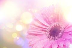Weinlese Gerbera-Gänseblümchenhintergrund Stockbilder
