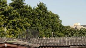 Weinlese-Holzhaus-Dach mit Vögeln stockbild