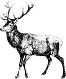 Weinlese-Illustrationsrotwild Lizenzfreie Stockfotos