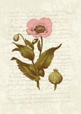 Weinlese-Karte mit Mohnblumeblume lizenzfreie abbildung