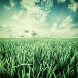 Weinlese-Landschaft mit Feldern und Himmel Stockfotografie