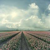 Weinlese-Landschaft mit roten Tulpen Stockfoto