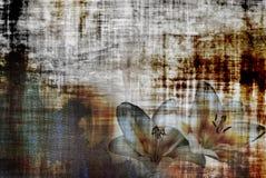Weinlese lilly stockbilder
