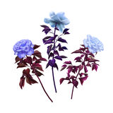 Weinlese mit drei unterschiedliche Rosen Stockbilder