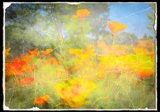 Weinlese-Mohnblumen Stockbild