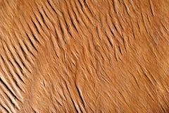 Weinlese oder grungy brauner Hintergrund des natürlichen Holzes Lizenzfreies Stockbild