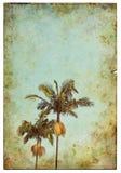 Weinlese-Palmen-Postkarte Stockfotos